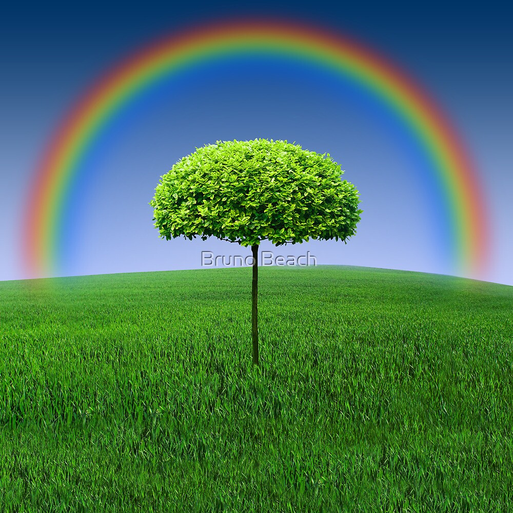 Evergreen Topiary tree with Rainbow over by Bruno Beach