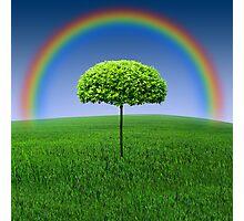 Evergreen Topiary tree with Rainbow over Photographic Print