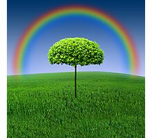 Evergreen Topiary tree with Rainbow over Photographic Print