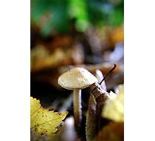 Fruitful soil Photographic Print