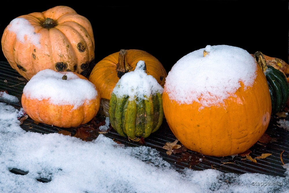 Six Pumpkins Surprised... by steppeland