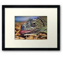 Iguana Sticking out his Tongue Framed Print