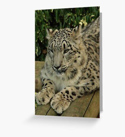Hara from Paradise Wildlife Park Greeting Card