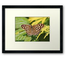 Spotted  Brown Framed Print
