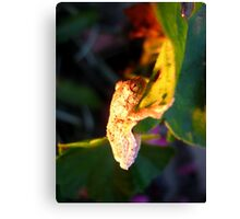 Colours on Kermit Canvas Print