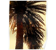 Palm Trees - Soft Glow Poster