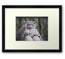 Hara from Paradise Wildlife Park Framed Print