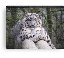 Hara from Paradise Wildlife Park Canvas Print