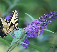 Butterfly Bush With Swallowtail Butterfly by Terry Aldhizer