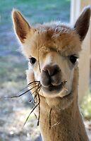 awesome alpaca by patticake