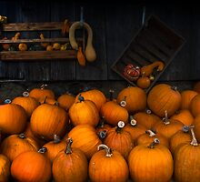 Autumn Pumpkin Harvest  by Dania Reichmuth