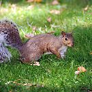Bushy Tailed by jules572