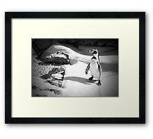 Lonely Penguin Framed Print