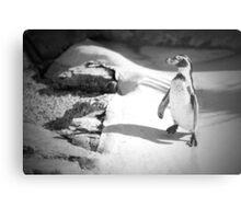 Lonely Penguin Metal Print