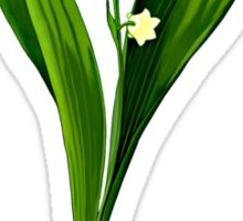 Convallaria majalis-lily of the valley .... Sticker