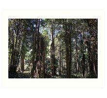 """Into The Woods"" - Mount Wilson (5), NSW, Australia Art Print"