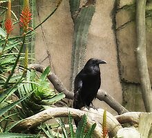 Black Crow by Christopher Johnson