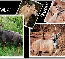"""A  COLLAGE OF THE """"NJALA"""" and the """"KUDU""""  by Magriet Meintjes"""