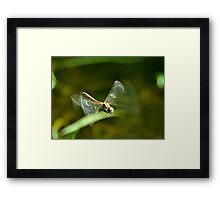 In Flight Darter Framed Print