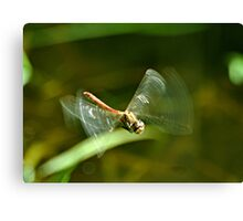 In Flight Darter Canvas Print