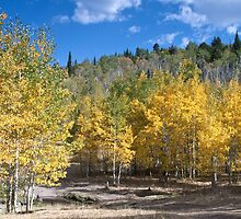 Aspen in Idaho 1 by Forrest  Ray