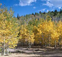 Aspen in Idaho 1 by Forrest  Ray