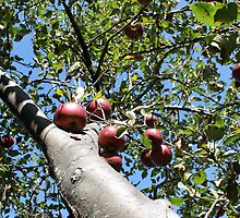 Apple Tree in the Berkshires by Natalie Whatley