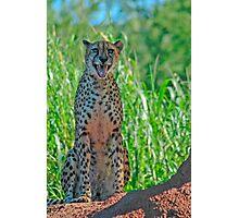 Honolulu Cat Photographic Print