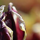 purple power by Danielle Verhoeven