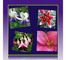 Lilies and Fuchsias - Summer Flowers Collage Photographic Print