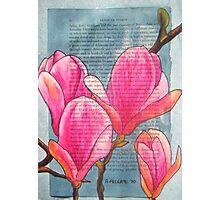 Magnolias XX Photographic Print