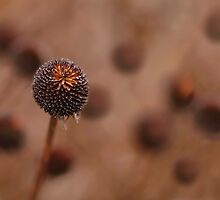Seed Pod by Richard G Witham