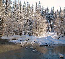 Silent Snow by Kathleen Jones