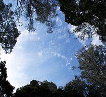 Australia Wonderland by Stacy Hill