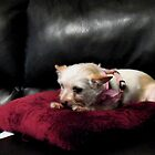 Queen of the Couch by © Bob Hall