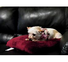 Queen of the Couch Photographic Print