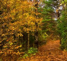 Impressions of Forests - A Walk up the Colorful Autumn Path by Georgia Mizuleva