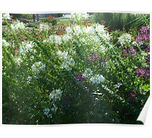 wind swept flowers Poster