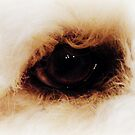 Labradoodle&#x27;s Eye by David123