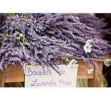 Lavender bunches Photographic Print