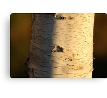 Birch Trunk- Wonder Lake, IL Canvas Print