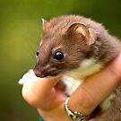 Watson the Weasel by Karen Peron