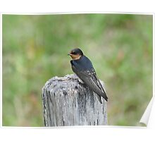 Perched On A Post Poster