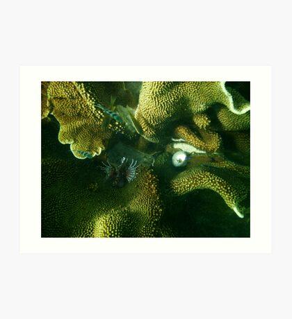 Lion fish in coral, Ningaloo, WA Art Print
