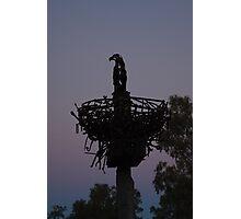 Eagles Spanner Nest Photographic Print