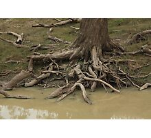 Gnarled Endings - Burke Photographic Print