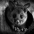 Playing Possum by aluzhun