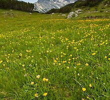 Mountain meadow by fos4o