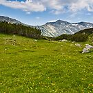 Mountain meadow by fos4o