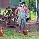 The Old Tin Chook Farmer by Michael John